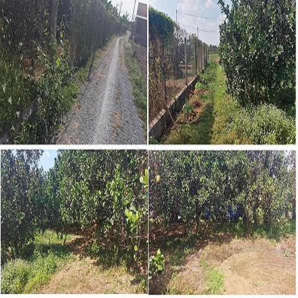 Cần bán 200m2 Thổ Cư và 1367m2 đất trồng cây lâu năm tại Xã Bạch Đằng, Tân Uyên, Bình Dương
